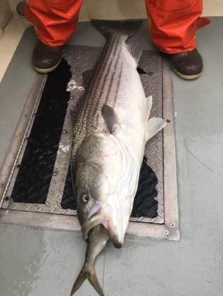 fishstix3